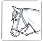 Cabeça de cavalo 2