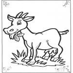 Animais - Cabra 2