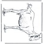 Animais - Cabra