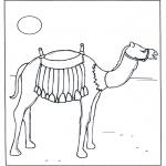 Animais - Camelo ao pôr do sol
