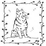 Animais - Cão 4