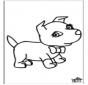 Cão 6