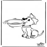 Animais - Cão