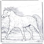 Animais - Cavalo a galope