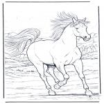 Animais - Cavalo de corrida