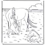 Animais - Cavalo e potro
