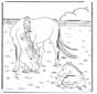 Cavalo e potro