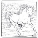 Animais - Cavalos 4