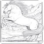Animais - Cavalos 5
