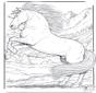 Cavalos 5
