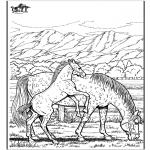 Animais - Cavalos 6