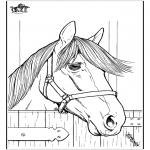 Animais - Cavalos 7