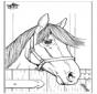 Cavalos 7