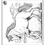 Animais - Cavalos 8