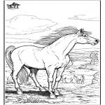 Animais - Cavalos 9