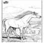 Cavalos 9