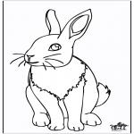 Animais - Coelho 4
