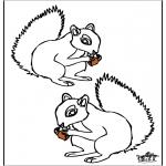 Animais - Esquilo 4