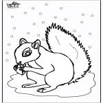 Animais - Esquilo 5