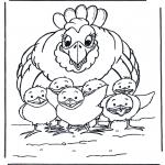 Animais - Galinha e pequenos pintaínhos