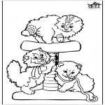 Animais - Gatinhos