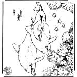 Animais - Golfinhos 5