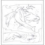 Animais - Golfinhos