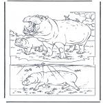 Animais - hipopótamo 1