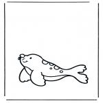 Animais - Leão marinho 1