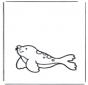 Leão marinho 1
