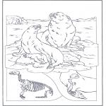 Animais - Leão marinho