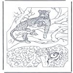 Animais - Leopardo 1