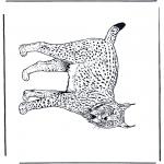 Animais - Lince