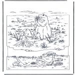 Animais - Marmota