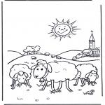 Animais - Ovelha ao pôr do sol