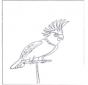 Papagaio 4