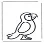 Papagaio bebé