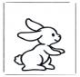 Pequeno coelho 1