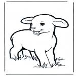 Animais - Pequeno cordeiro 1