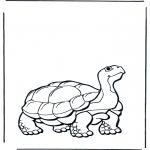 Animais - Tartaruga terrestre 2