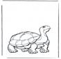 Tartaruga terrestre 2