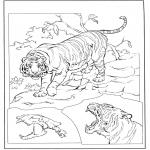 Animais - Tigre 3