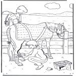 Animais - Tratamento do cavalo